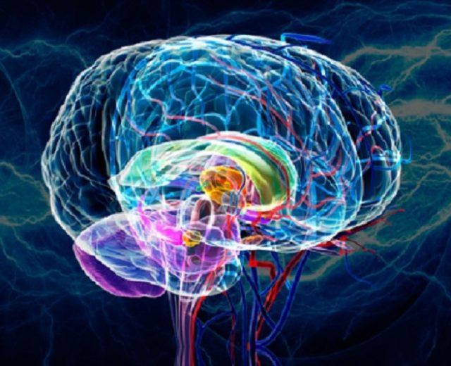 رگ مغز