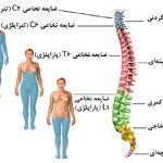 ضایعه نخاعی و انواع آن | کلینیک مغز و اعصاب اصفهان
