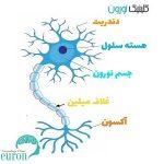 ساختمان نورون ها | کلینیک مغز و اعصاب اصفهان